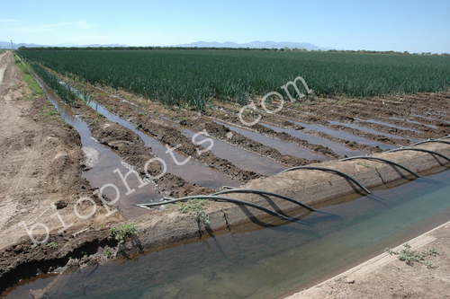 Siphon tubes for row irrigation