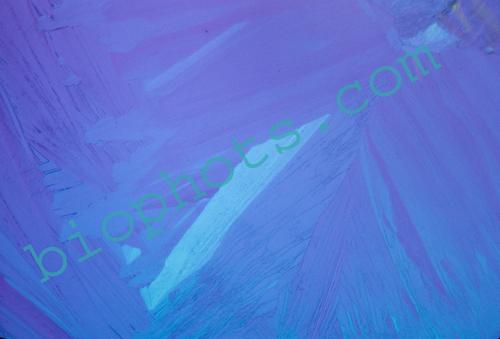 Acetimide Chrystal photomicrograph