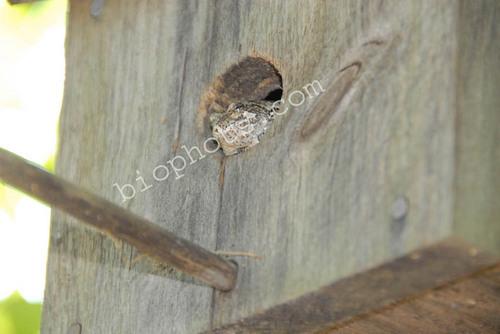 Tree frog in bird house
