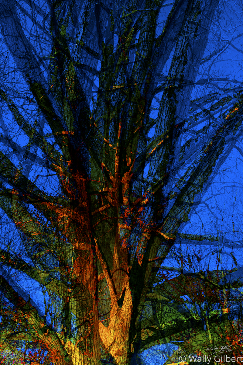 Trees - Blue (large view)