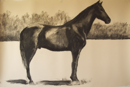 Drawing of Egypt, horse of General Ulysses S. Grant (large view)