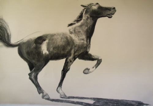 Nancy Whitin's large-scale drawing of Philip Sheridan's horse, Winchester. (large view)
