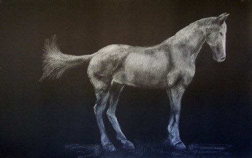 A dramatic large-scale drawing of a the civial war horse Colonel by Nancy Whitin. (large view)