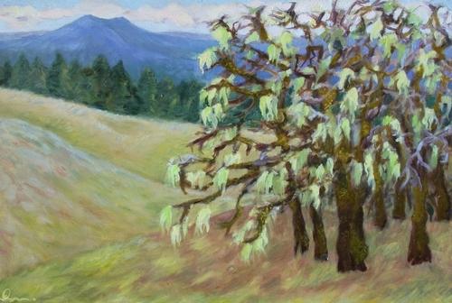Usnea covered oaks