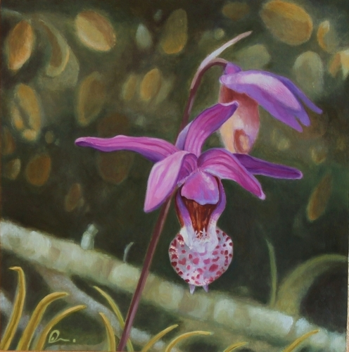 Calypso orchid by Betsy Williams