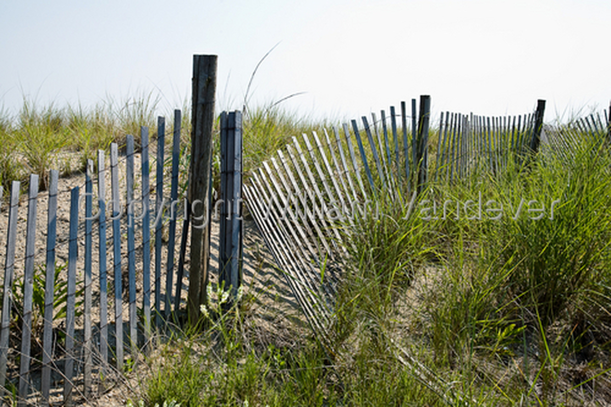 Dune Grass and Fence-Cape May (large view)