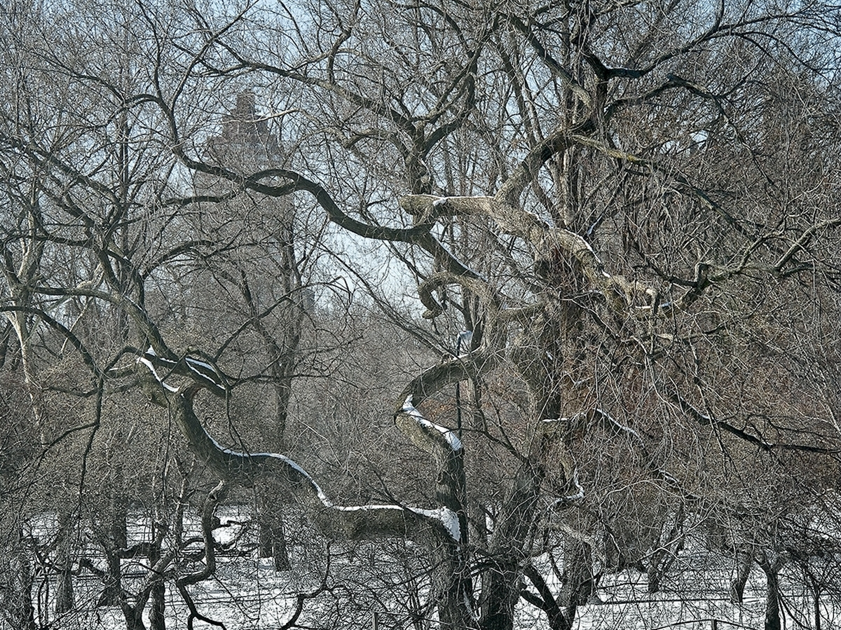 Central Park Thru Branchs (large view)