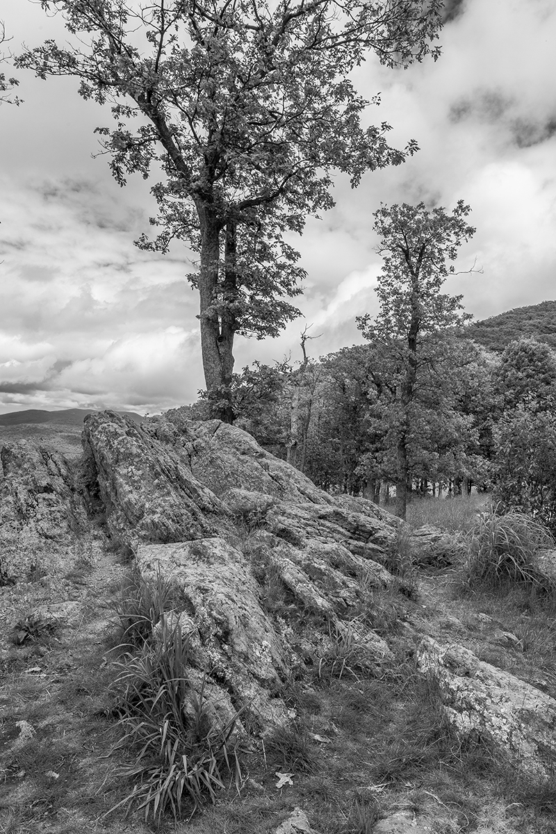 Skyline Drive - Tree and Stone (large view)