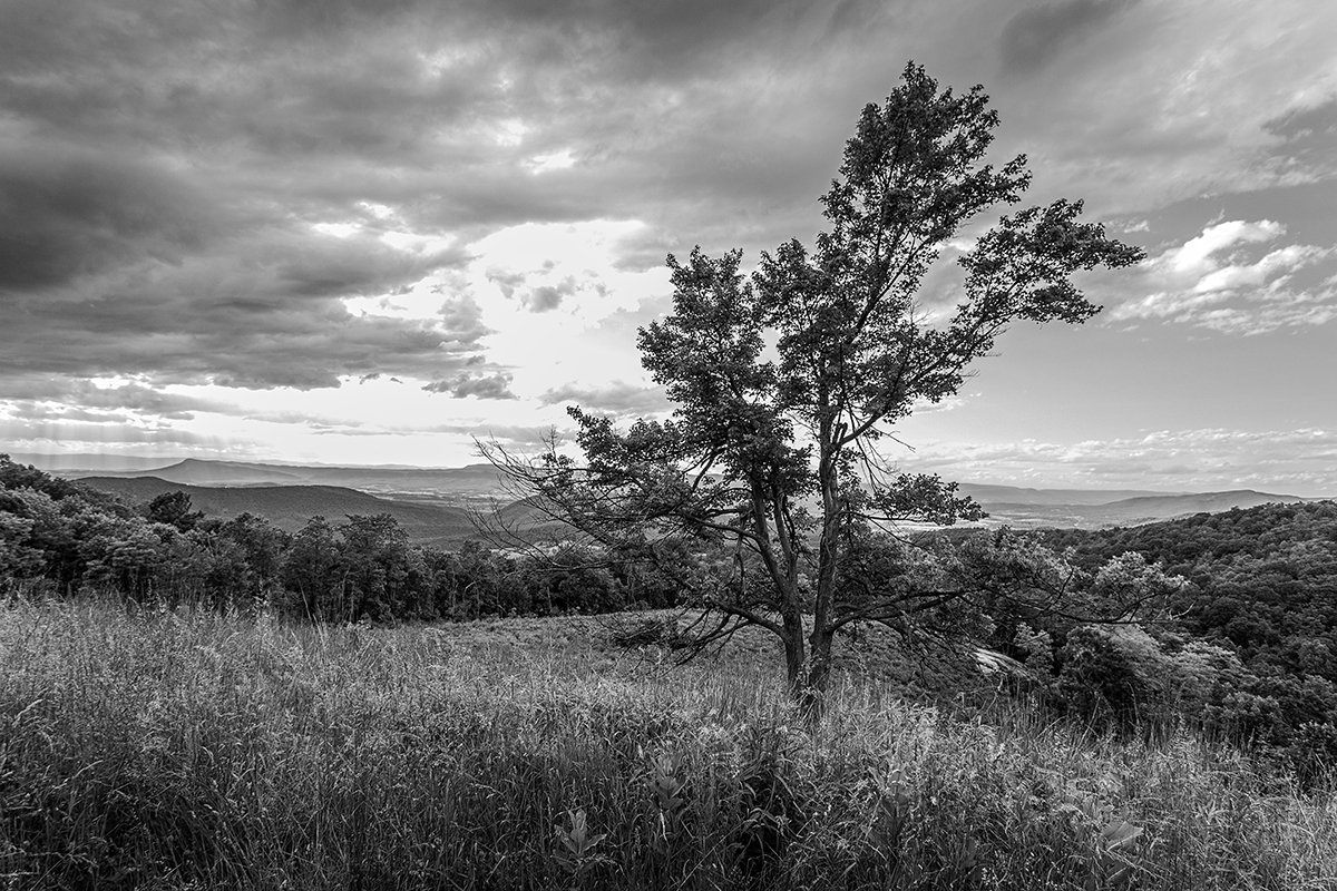 Stormy Skyline - Tree and Meadow (large view)