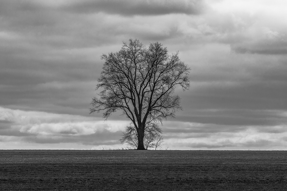 Tree and Plowed Field - Lancaster County (large view)