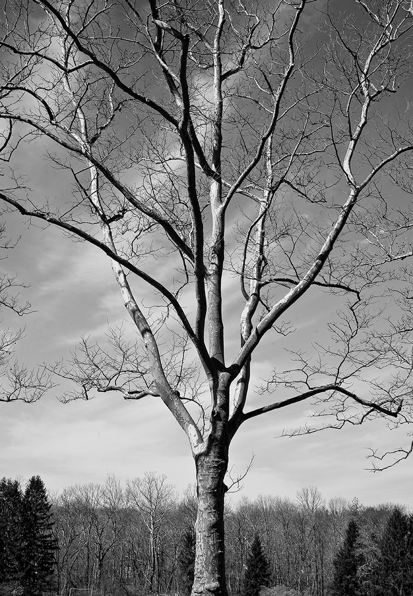 Tree and Sky - Cherry Valley Road (large view)