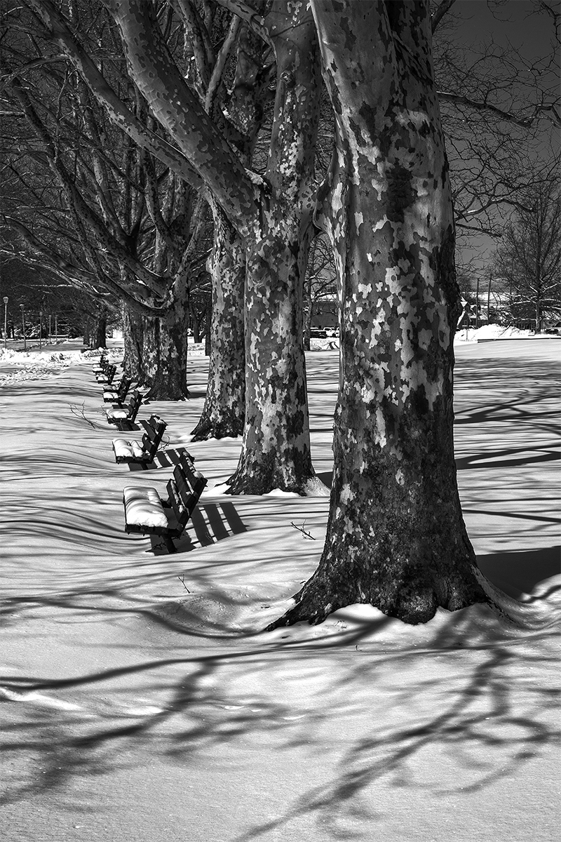 Trees and benches in Snow (large view)