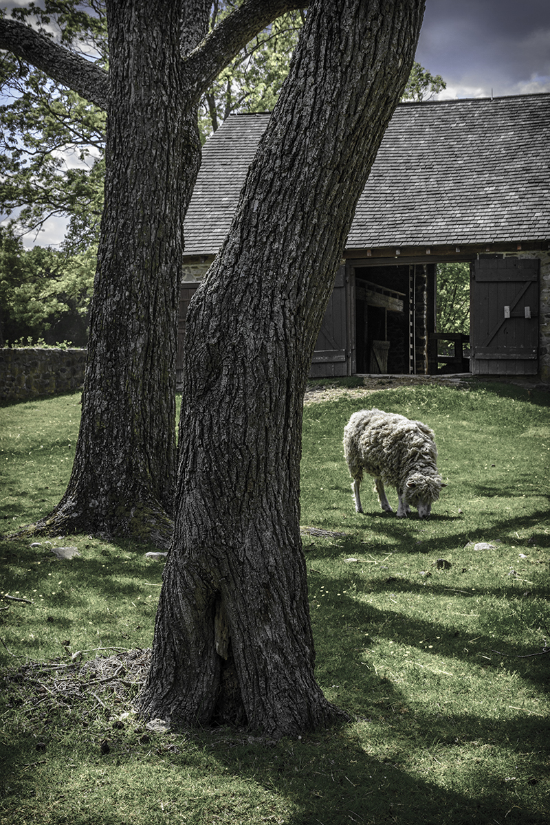 Barn and Sheep (large view)