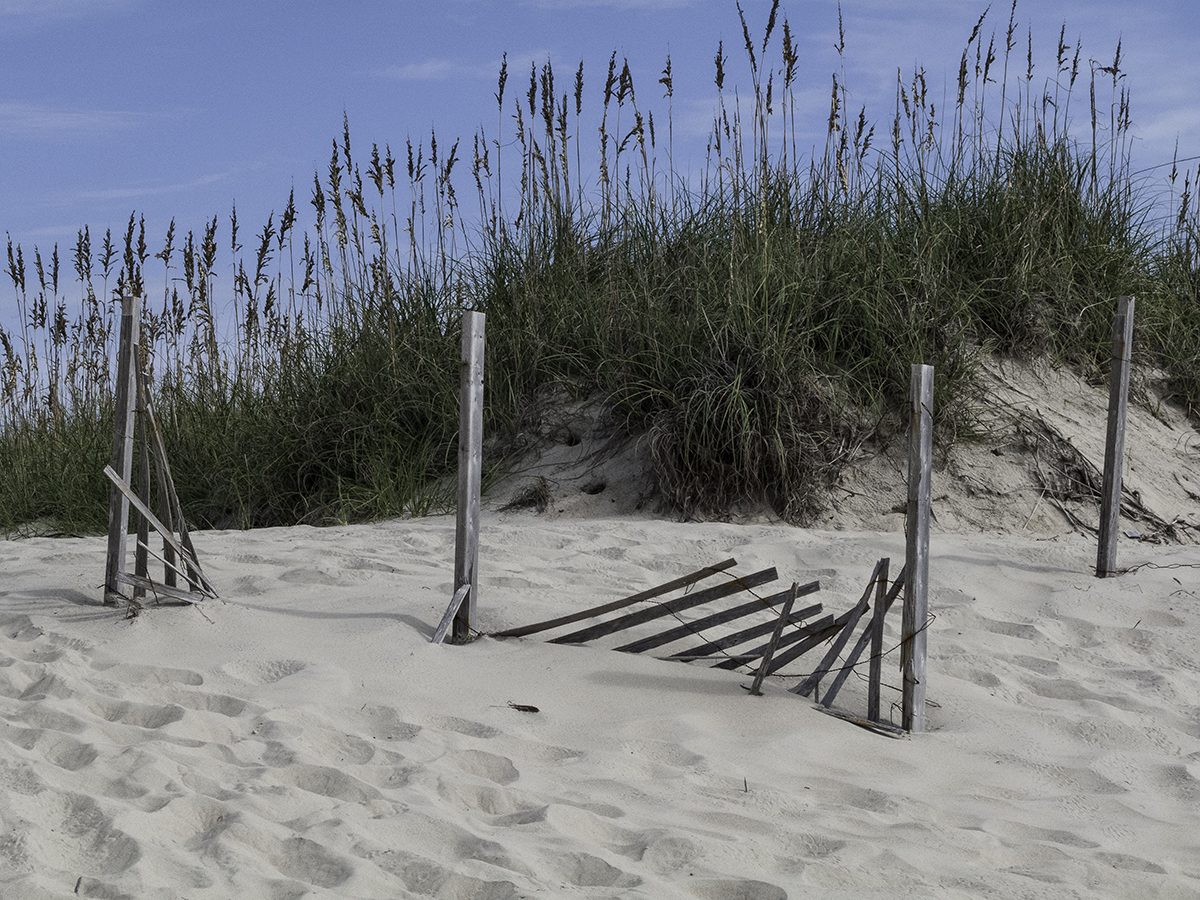 Fence and Dune Grass / 1 (large view)