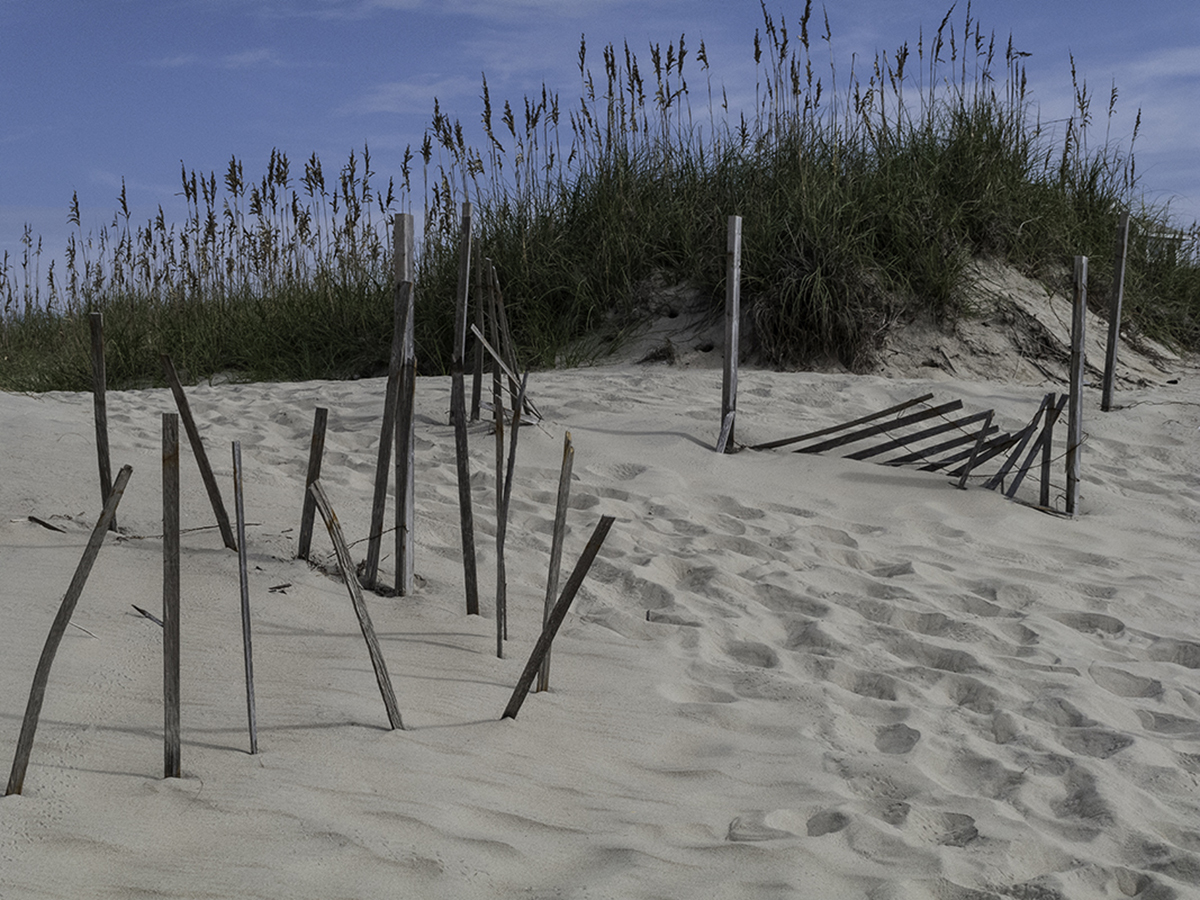 Fence and Dune Grass / 2 (large view)