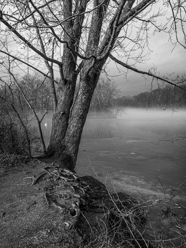 Swan and Fog by William Vandever