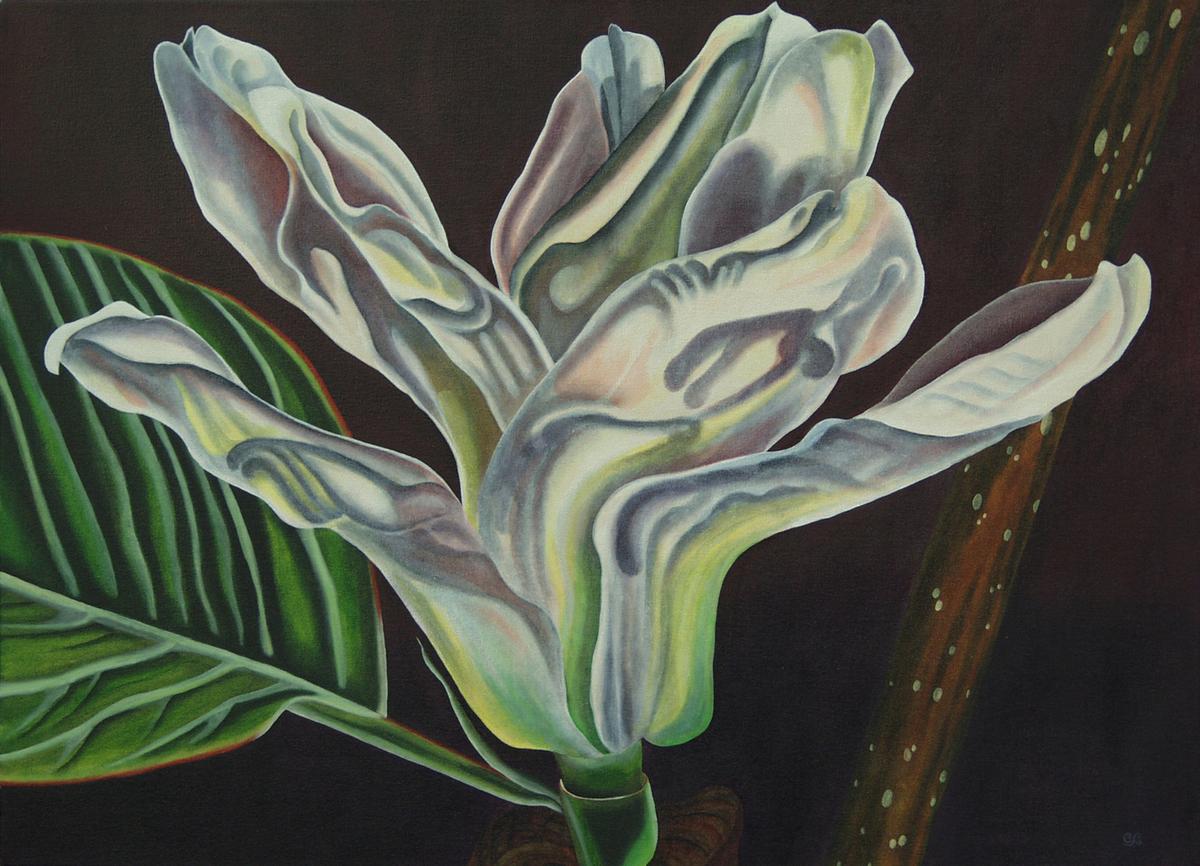 Magnolia (large view)