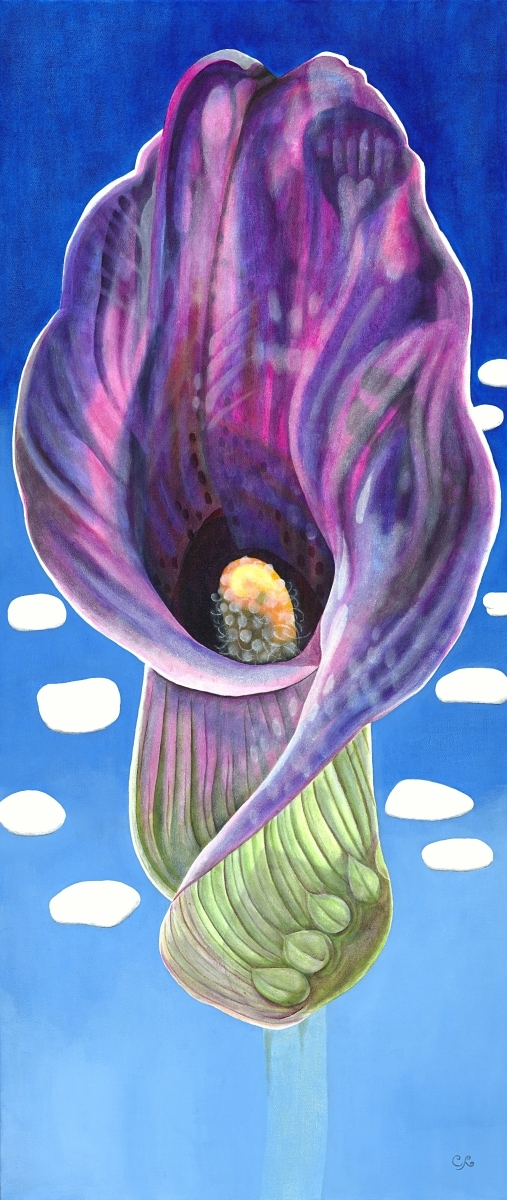 Spotted Calla (large view)