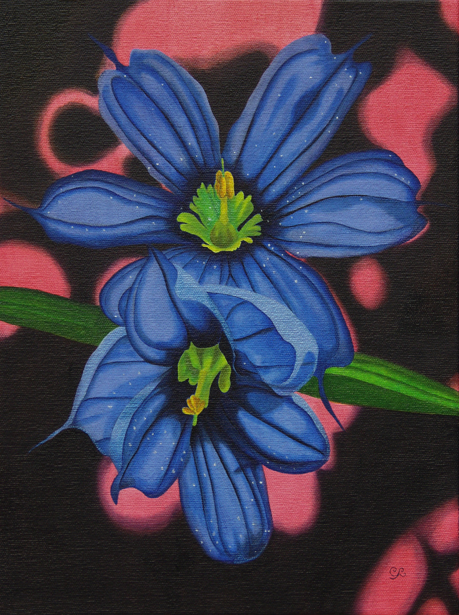 Blue Eyed Grass (large view)