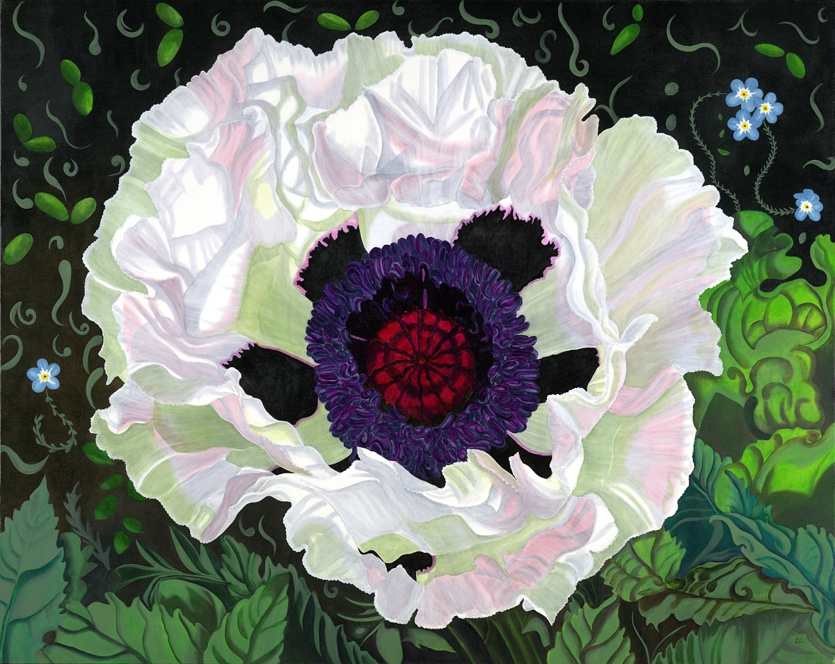 Big White Poppy (large view)