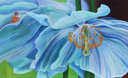 Meconopsis 2 by Peggy Clark Lumpkins