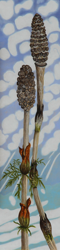 Horsetails by Peggy Clark Lumpkins