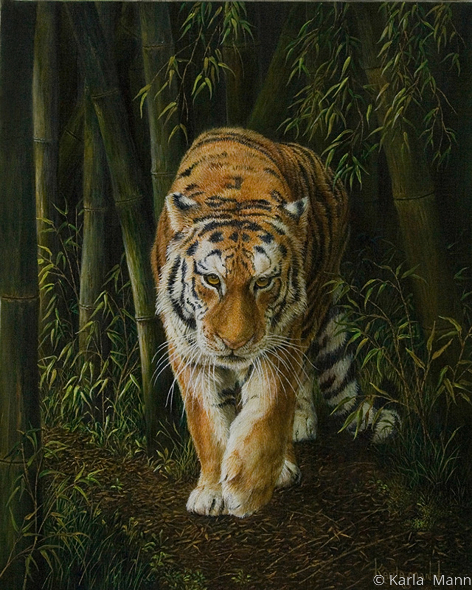 Predator (large view)