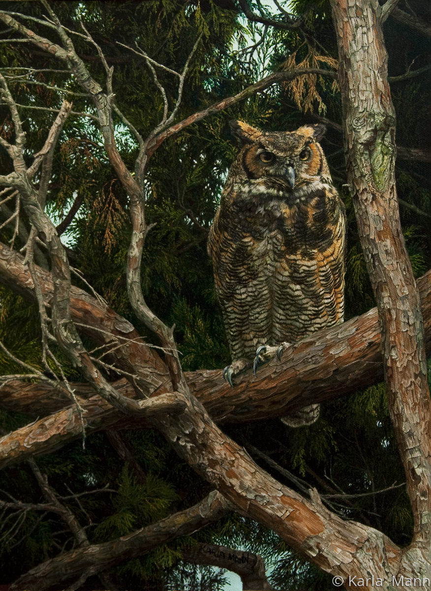 Horned Owl (large view)