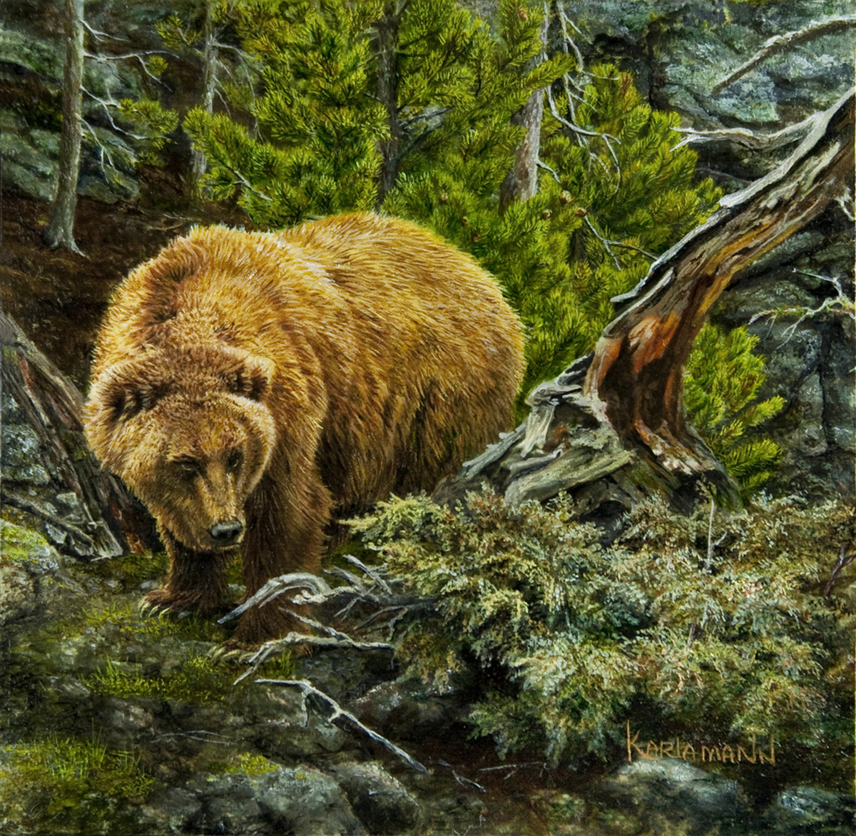Teton Grizzly (large view)