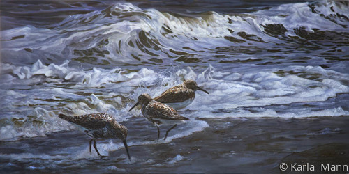 Sandpiper Water Dance