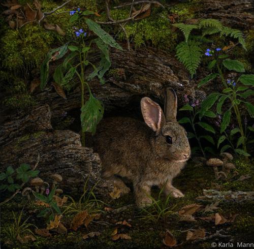 Thumper's Hideout