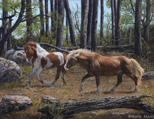 Wild Horse Coutship