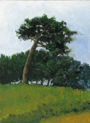 Laguna Pine