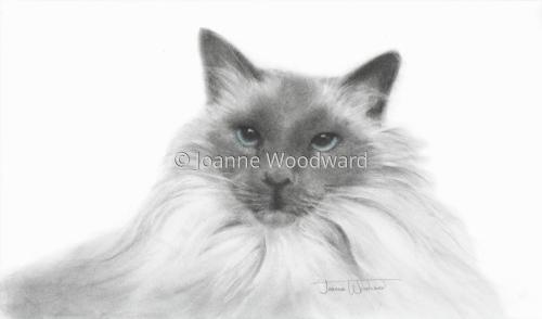 Pui by Joanne Woodward