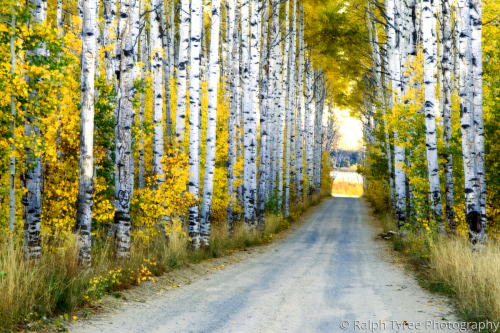 Aspen Alley by Ralph Tyree Photography