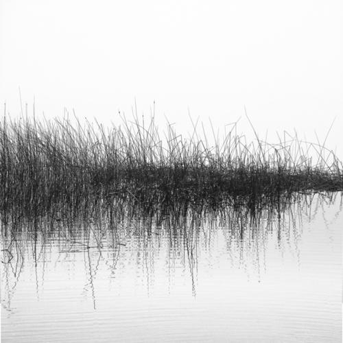 Water / Reeds  by Yoram Gelman Photography:   Art through Light . . . .